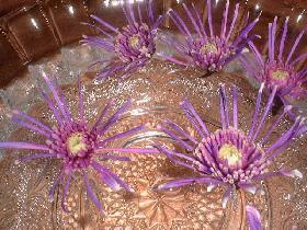 puis déposer les fleurs à la surface de l'eau ( il ne doit pas y avoir d'espace entre les fleurs afin que ca ne bouge pas)