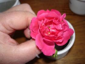 piquer 1 ou 2 petites roses